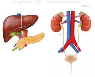 portfoliografik_organe1